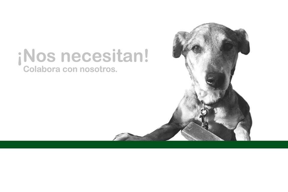 fundación de ayuda a los animales
